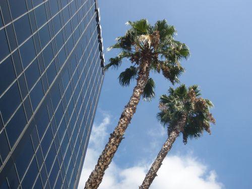 2010-08-31-encino-palms-small.jpg